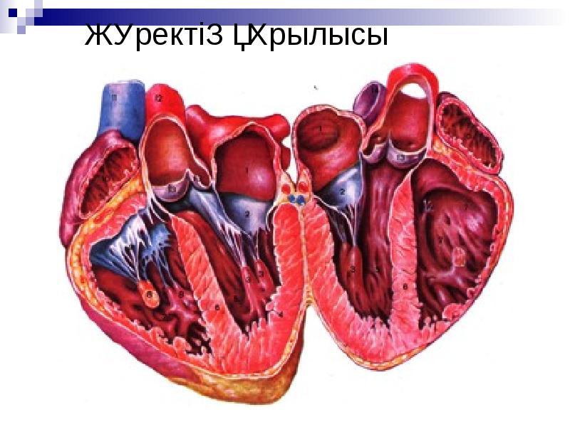 инструкция сердечный клапан забит кальцием лечение запчастей, авторазборка Хонда