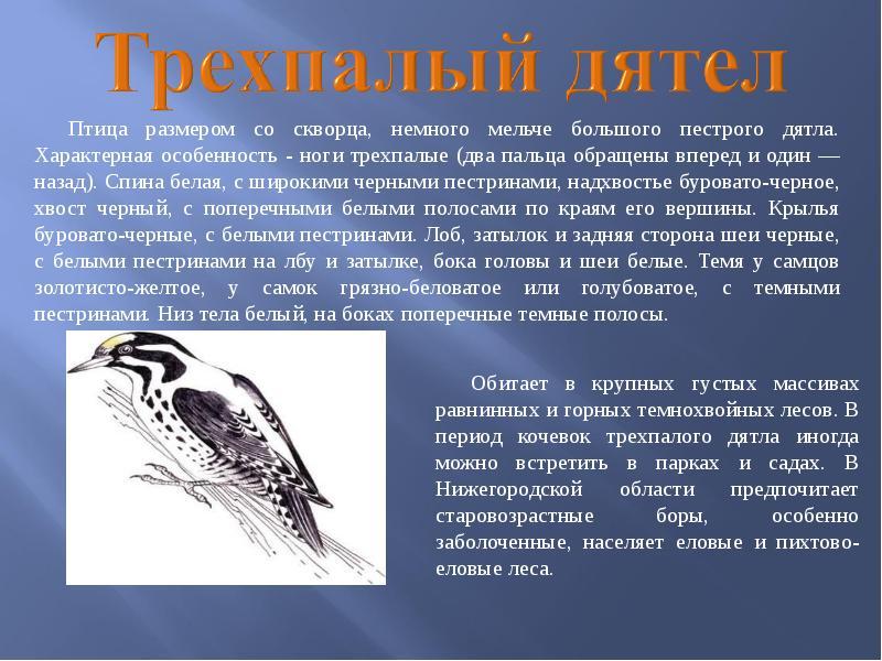 птицы нижегородской области занесенные в красную книгу концертном зале проходят