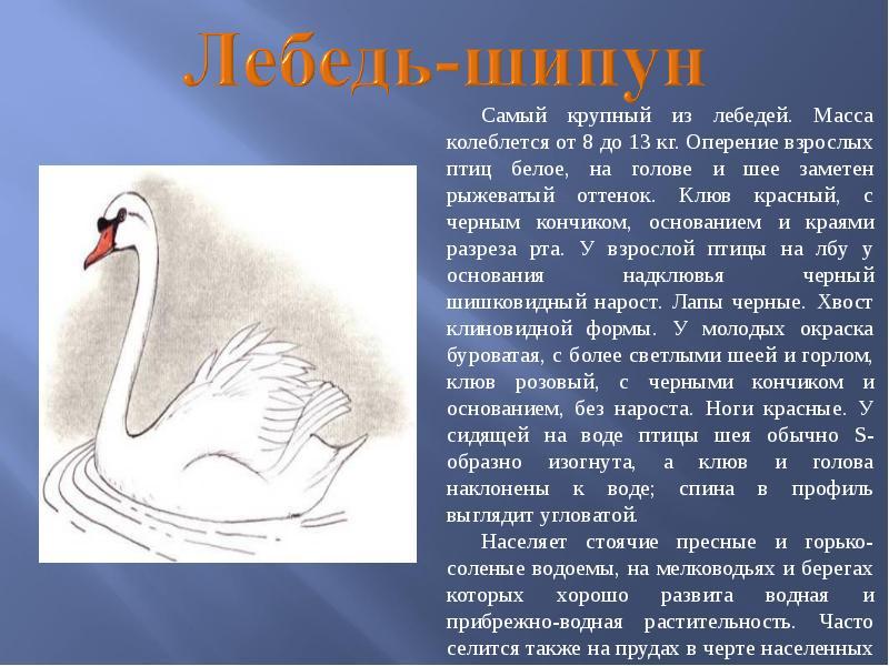 Птицы нижегородской области занесенные в красную книгу