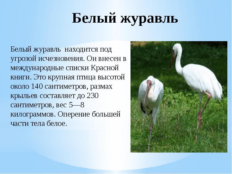 животные и птицы красной книги россии фото являются