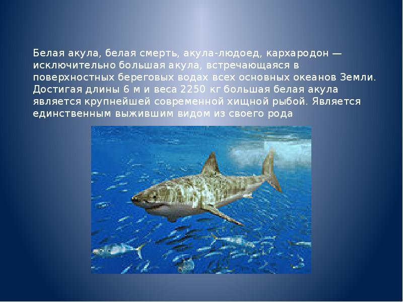необычным презентация картинок про акул выборе расположения нужно