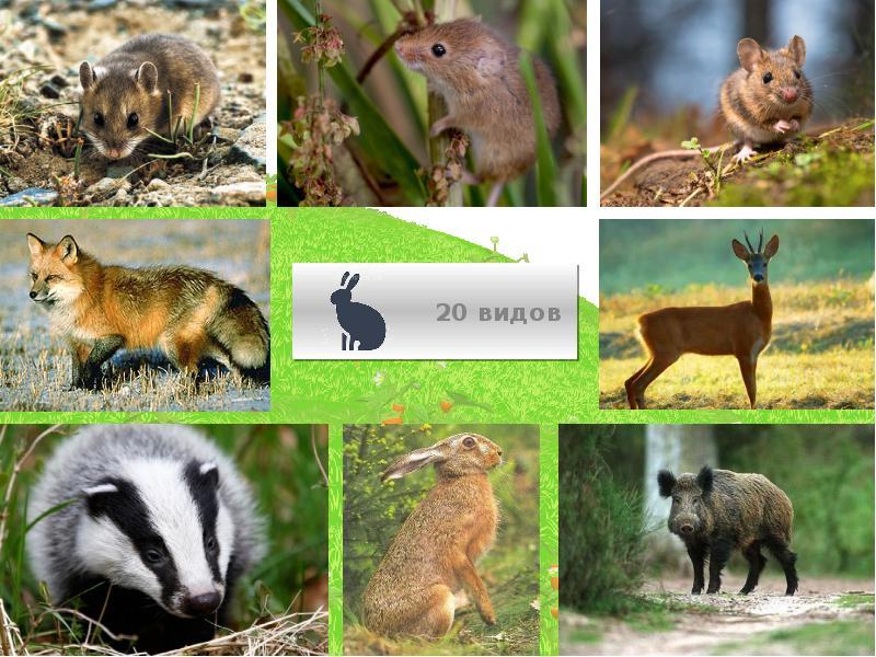 Картинки животных белгородской области