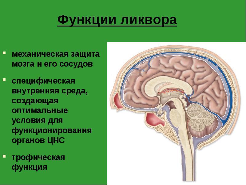 Застой ликвора в головном мозге