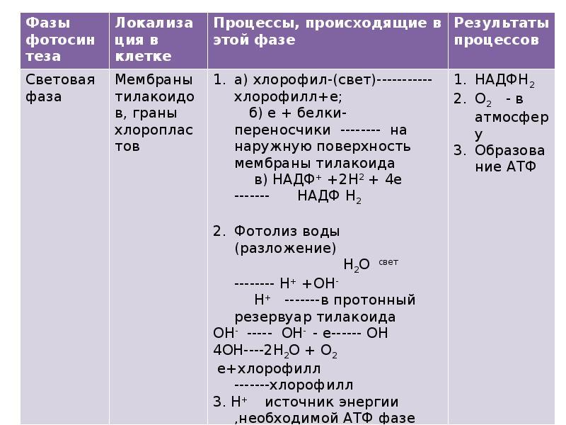 Доклад фотосинтез и хемосинтез себе правило