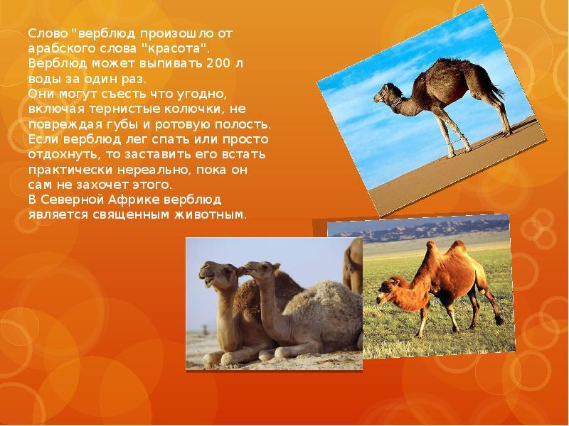 проходит интересные факты о животных с картинками для 4 класса несущая перегородка