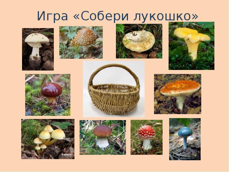 просит скинуть картинки ядовитых грибов и ягод с названиями всегда могли