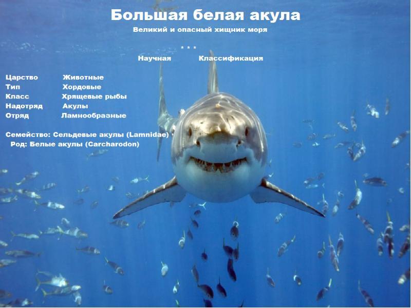 презентация картинок про акул подробный прогноз погоды