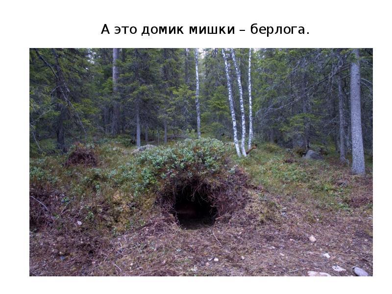 картинка где живет медведь