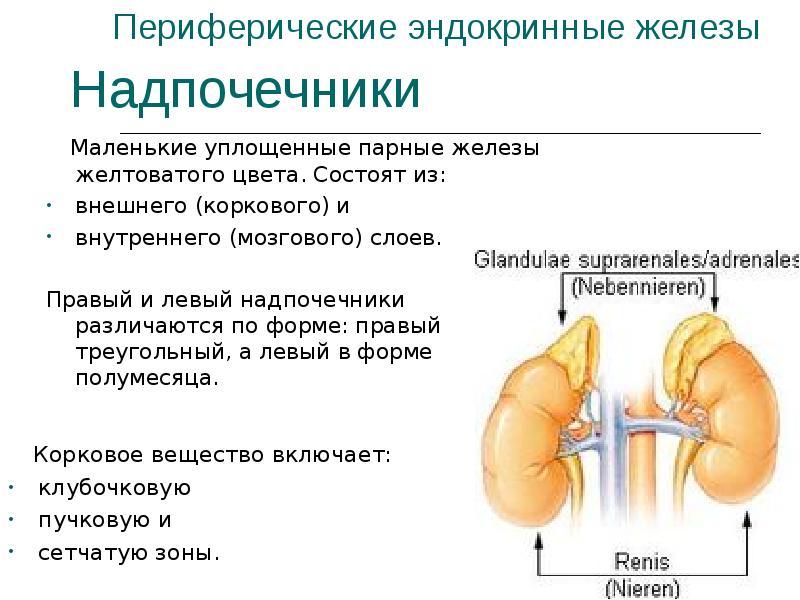 Битумная черепица монтаж своими руками