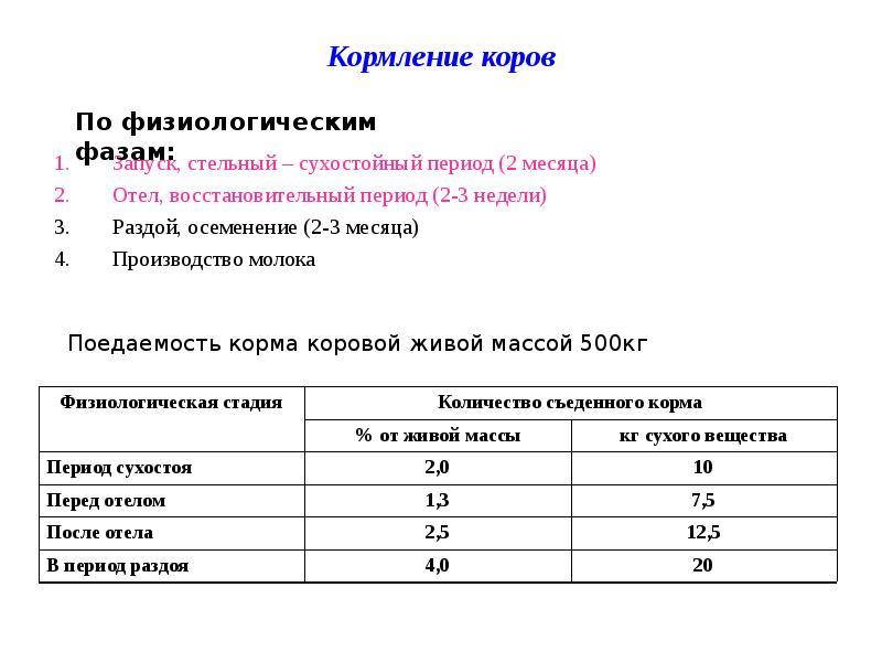 Чем кормить месячных телят в домашних условиях 545