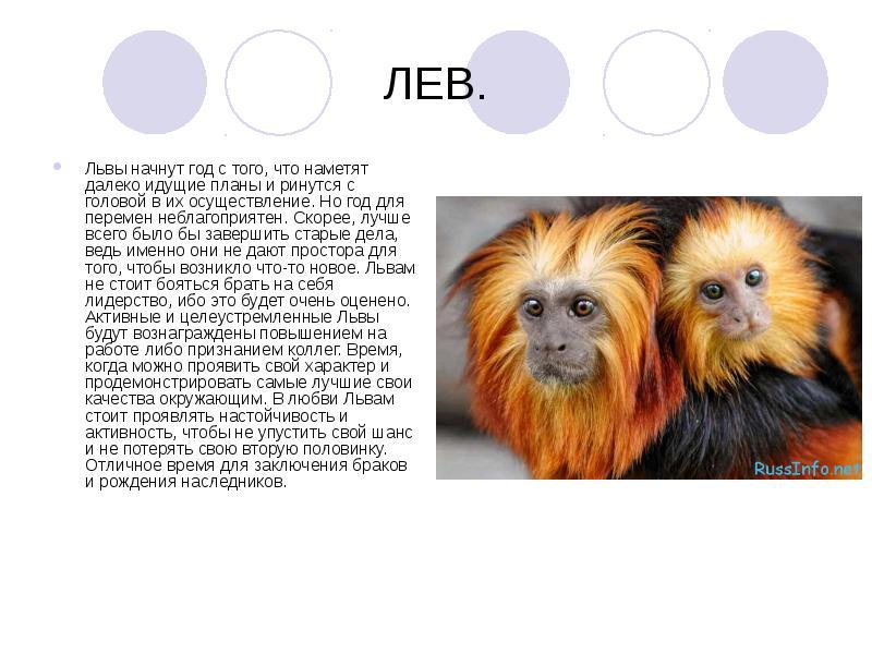 Гороскоп сегодня лев мужчи