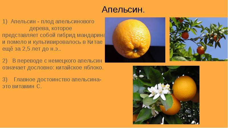 Киви фрукт в картинках отлично запоминаете