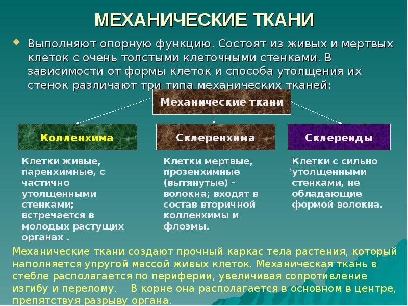 таблица механическая ткань