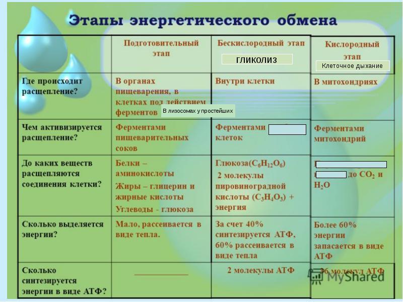 Бескислородный фотосинтез химическая формула