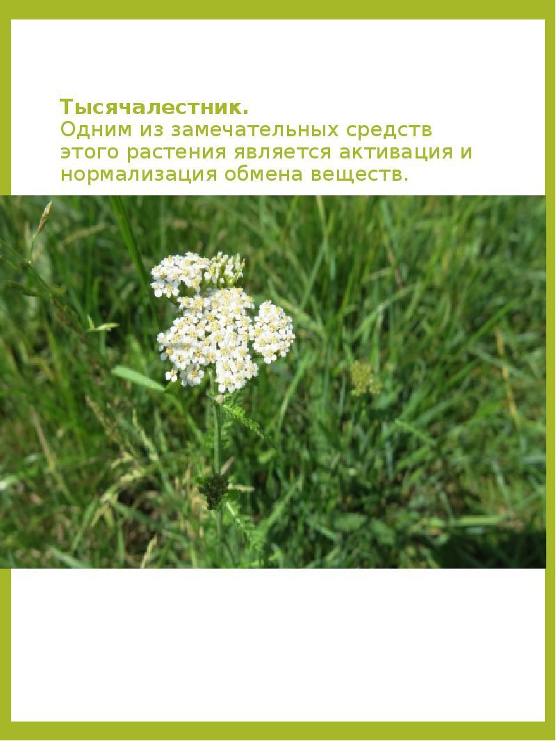 занимался животные и растения татарстана картинки бегущего волка