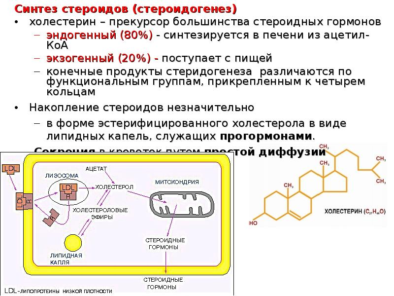 steroid sythesis Synthesis of lipids takes place at the smooth endoplasmic reticulum er, or endoplasmic reticulum, refers to a network of sacs and membrane-enclosed tubules that starts from the nuclear's membrane all through the cytoplasm.