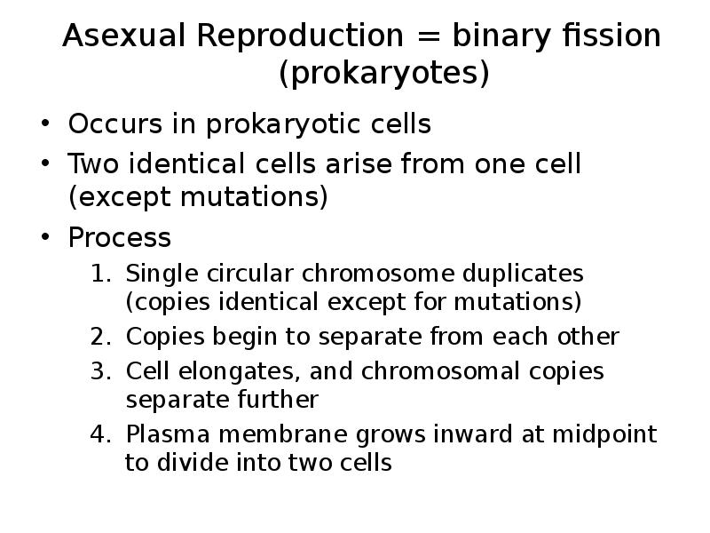 the reproduction of prokaryotic cells essay Prokaryotic cells besides differ in other ways from eucaryotic cells cells addition and dna reproduction is forced by specific cistron green goods, such as enzyme dna polymerase after dna reproduction, the combined deoxyribonucleic acid molecules are isolated ie detached from each.