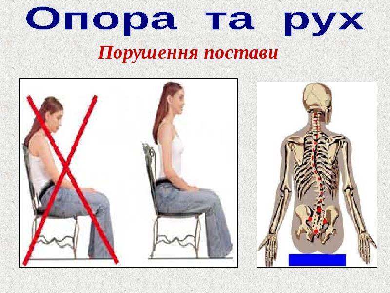 значення опорно-рухового апарату людини