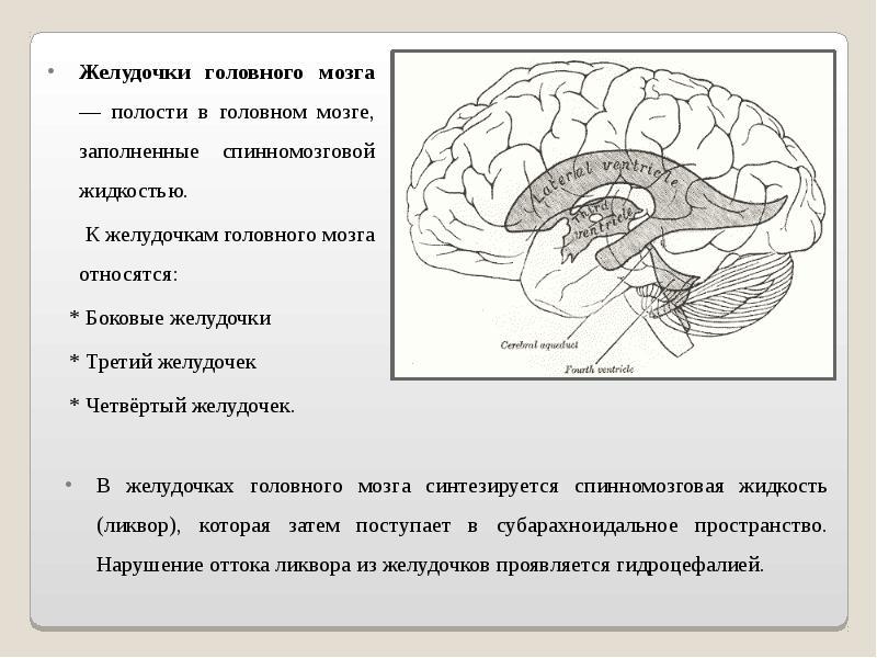 Разные желудочки головного мозга у грудничка