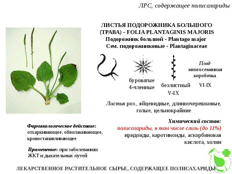 Полисахаридов знакомство с образцами