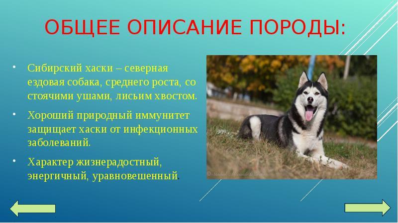 собак с характеристикой фотографии