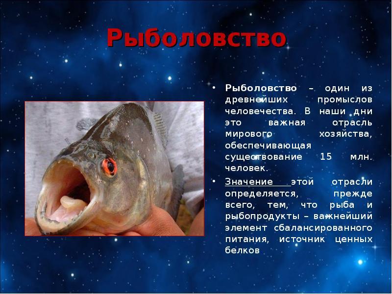 Презентация на тему рыболовство важная отрасль хозяйства