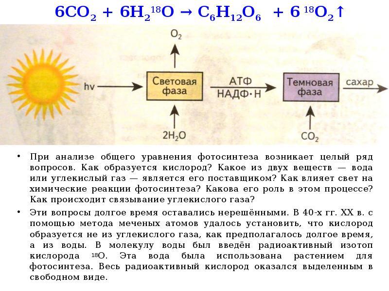 кислород образуется из молекулы углекислого газа виды спорта