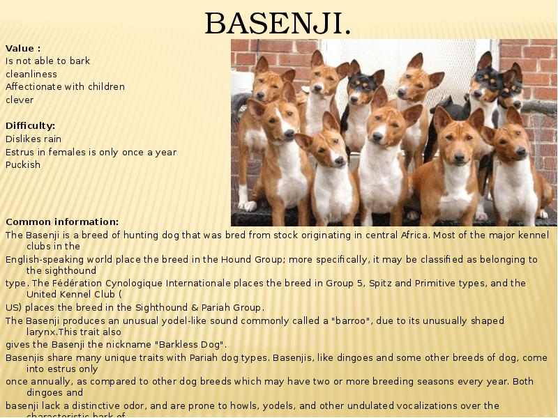 domestication of dangerous dog breeds essay Banning dangerous breeds of dogs is the right thing to do with these following arguments, the dog and its owner, the behaviour of the dogs and the affect they have on our community my solution/ point of view to this problem is to not destroy/kill the dogs but breed them out.
