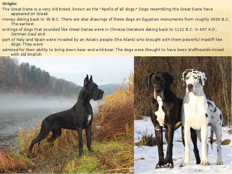 domestication of dangerous dog breeds 25 most dangerous dog breeds focuses on the potential of a dog to cause serious injury to a victim it is important to note however that most dogs are bred with the desire to please their masters.