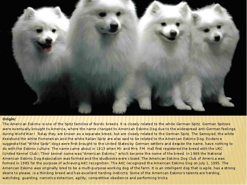 the domestication of the dog and its purpose Buy the domestic dog: its evolution, behaviour and interactions with people by james serpell (isbn: 9780521425377) from amazon's book store everyday low prices and free delivery on eligible orders.