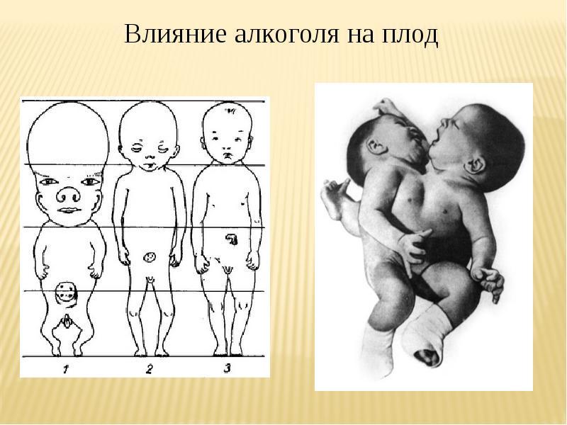 Вредное влияние алкоголя на развитие зародыша