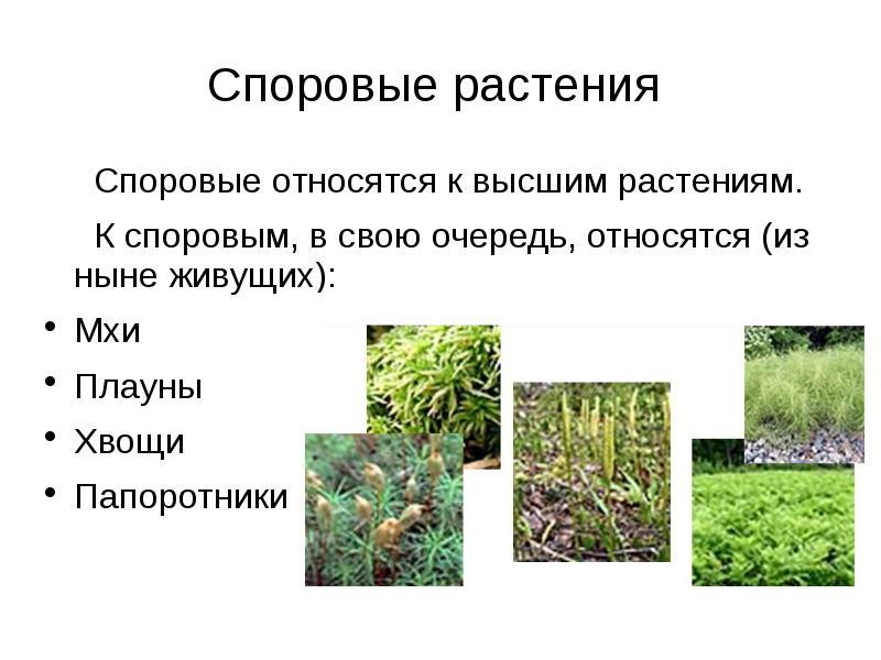 Хищные растения фото и названия значит