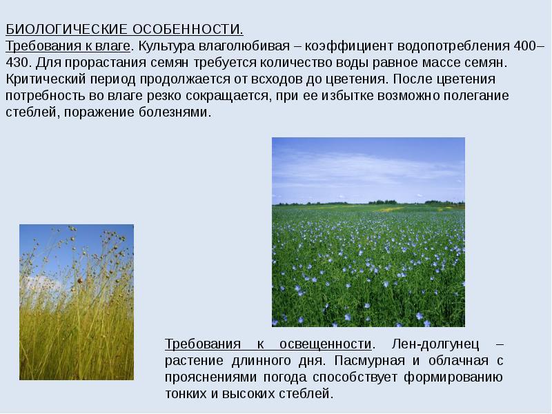 Лен технология выращивания 73