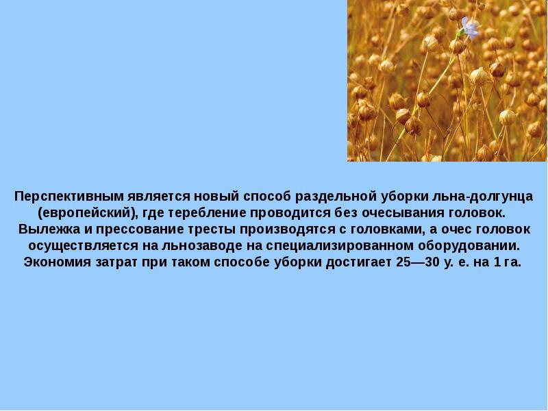Особенности выращивания льна-долгунца 86