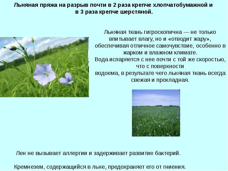 Лен технология выращивания 64