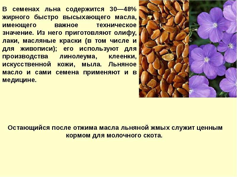 Лен технология выращивания 22