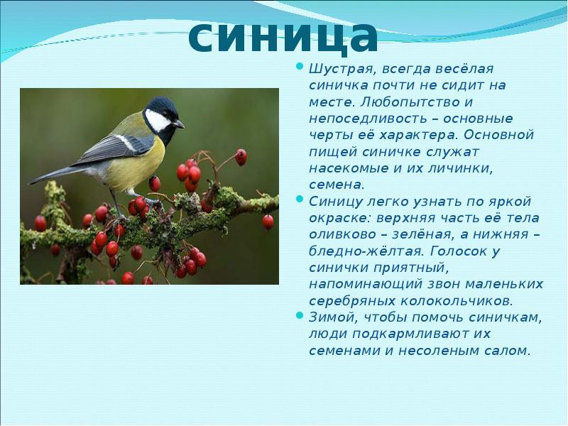 как фото и рассказы о птицах фото