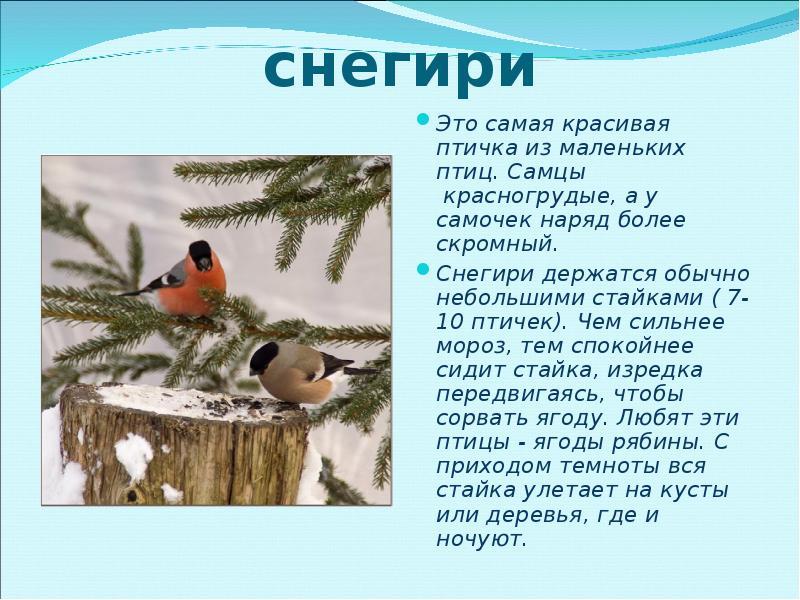 картинки и рассказы про птиц очень