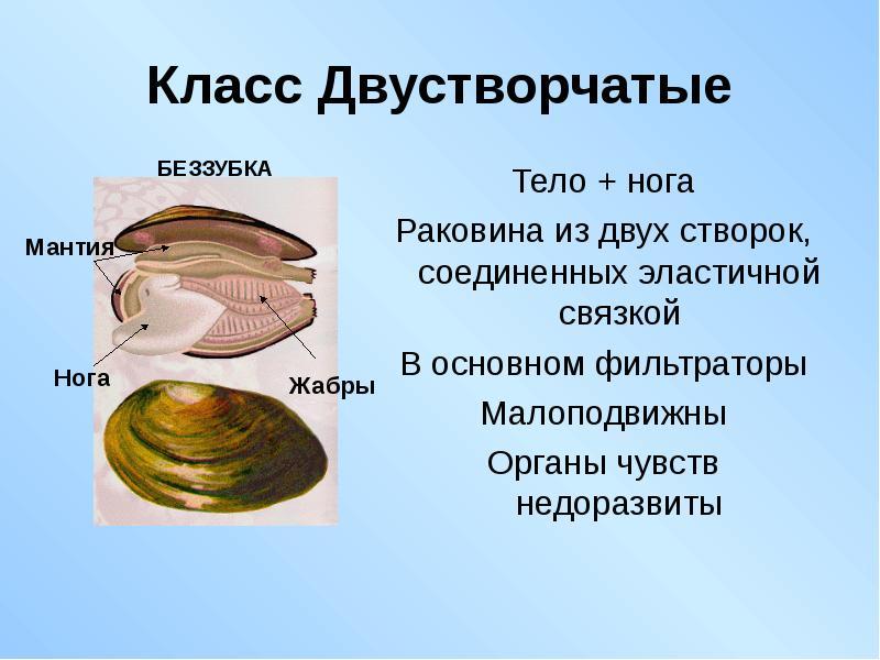 Моллюски и все что с ними связано