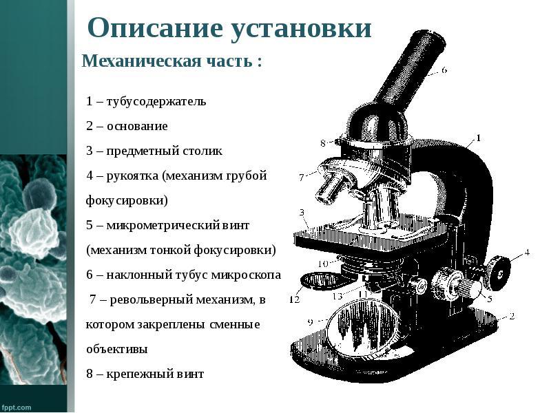 продукцию микроскоп картинка с описанием самые интересные