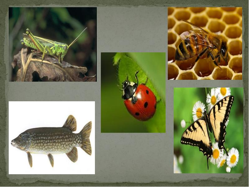 сожалению, картинка четвертый лишний насекомые выходя дому