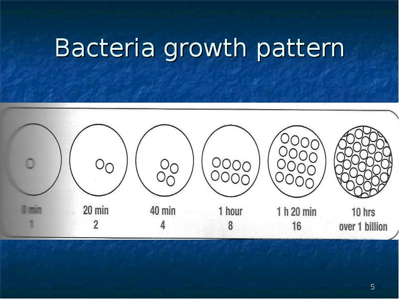 bacterial growth patterns