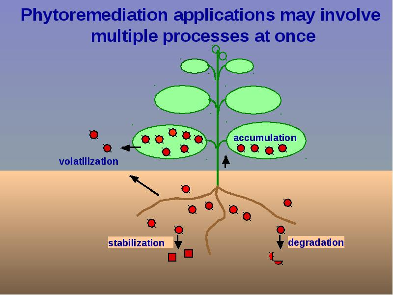 phytoremediation process Phytoremediation definition, a process of decontaminating soil or water by using plants and trees to absorb or break down pollutants phytoremediation [fahy-toh-ri-mee-dee-ey-shuh n.
