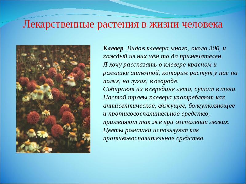 Реферат: использование ядовитых лекарственных растений в фитотерапии содержание введение.