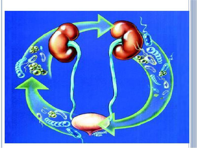 Boli Ale Sistemului Excretor - nucleus-mc.ro