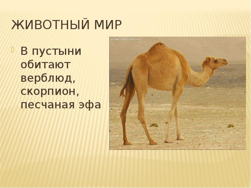 Sivera Sivera какие животные живут в пустыни что оно