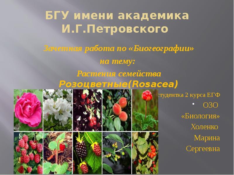 Доклад на тему семейство розоцветные шиповник 1746