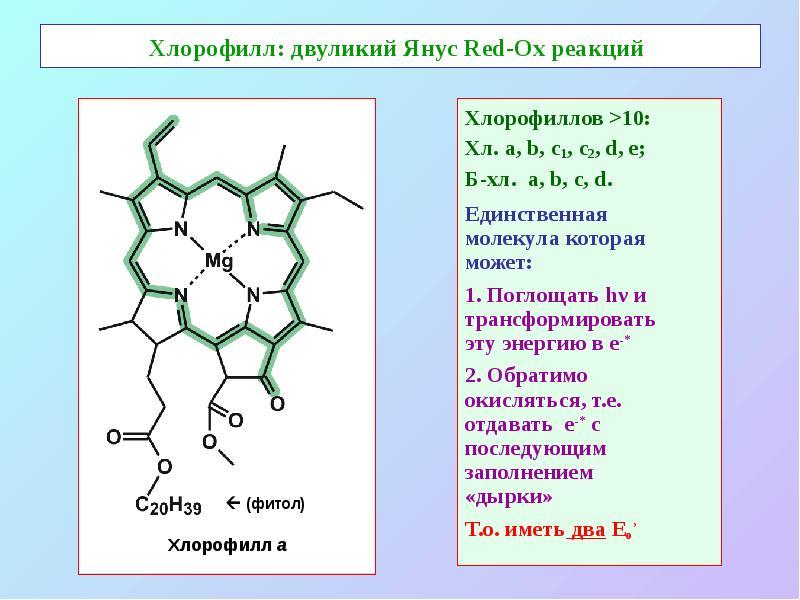 Хлорофилл c