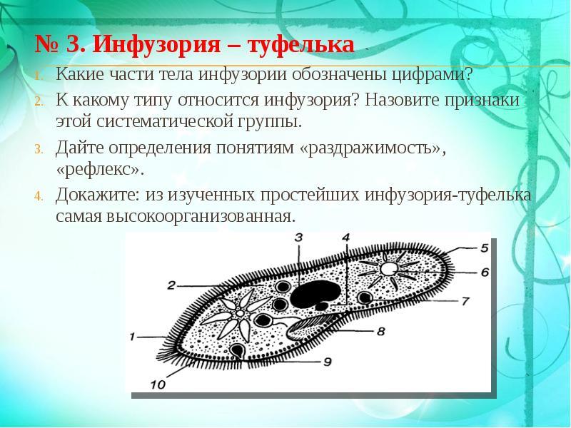 Рисунок инфузории туфельки с обозначениями