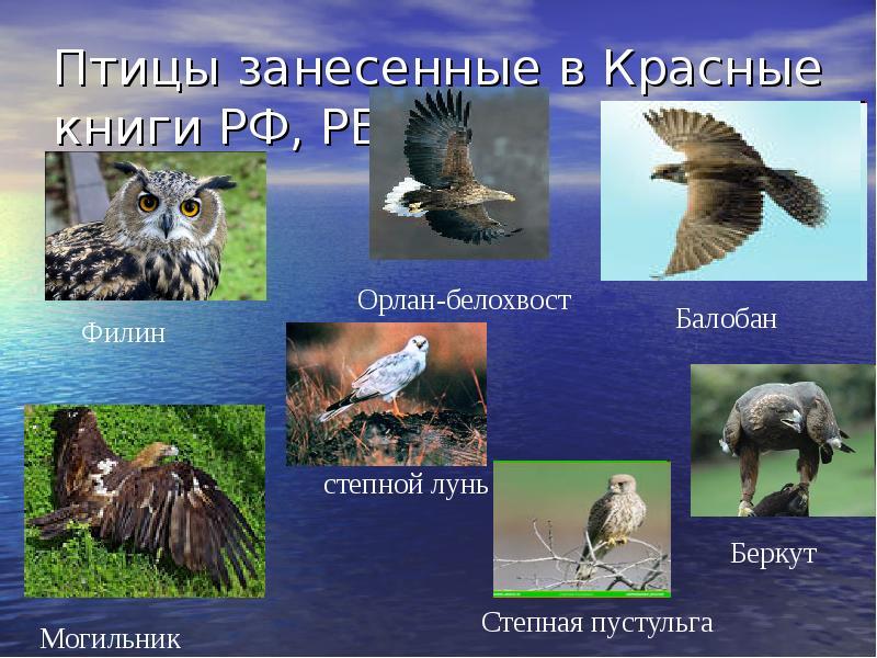 Красная книга башкортостана животные картинки